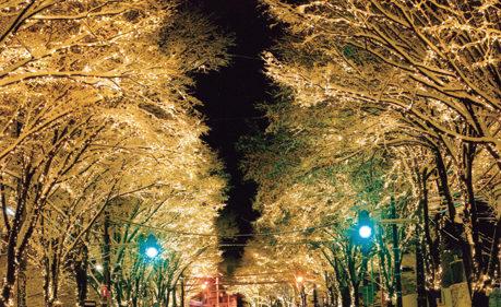 〈大館市〉大館シャイニングストリート ▷冬の大館を明るく照らす光の道