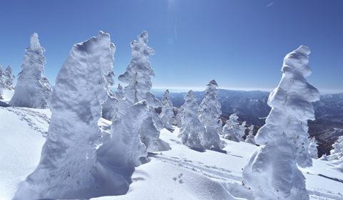 〈北秋田市〉ゴンドラで行く、日本三大樹氷 森吉山 ▷一面に広がる樹氷の世界を堪能