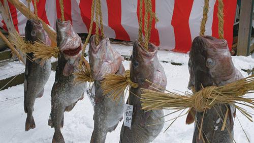 〈にかほ市〉掛魚まつり ▷荒縄で釣り上げた寒鱈を担ぎ歩く