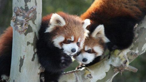 〈秋田市〉大森山動物園〜あきぎんオモリンの森〜開園 ▷3月16日に大森山動物園が通常開園