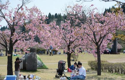 〈井川町〉日本国花苑さくらまつり▷桜と彫刻作品を同時に楽しめる