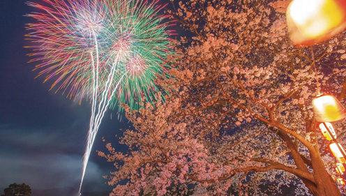 〈大仙市〉余目さくら花火観賞会▷満開の桜と花火のコラボレーション