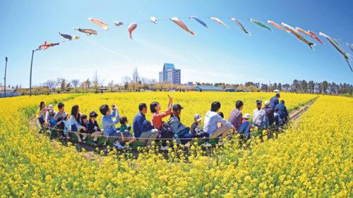 〈大潟村〉桜と菜の花まつり ▷GW中、村内がお祭りムード一色に
