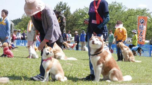 〈潟上市〉どきっ! わんこだらけの運動会!▷多数の犬が大集合 飼い主とともにゲームを楽しむ