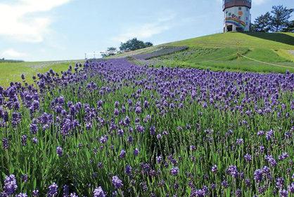 〈八峰町〉ポンポコ山公園▷初夏ののどかな風景が広がる公園