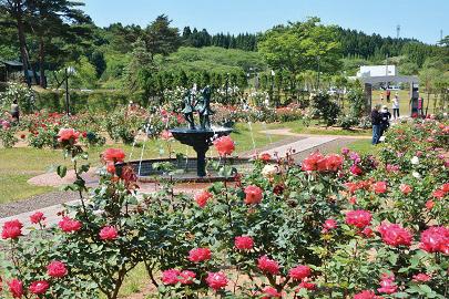 〈井川町〉日本国花苑バラ園 ▷麗しい花々を眺め優雅なひとときを