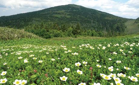 〈北秋田市〉森吉山 ゴンドラ山歩 ▷自然豊かな森吉山を散策しよう