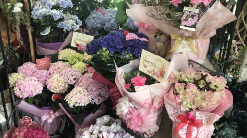 いつもお世話になっているデザイナーさんへ!感謝の気持ちを込めた贈り物を「花みづき」で購入!