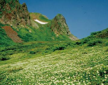 〈仙北市〉秋田駒ケ岳▷高山植物を眺めながら秀峰を歩こう