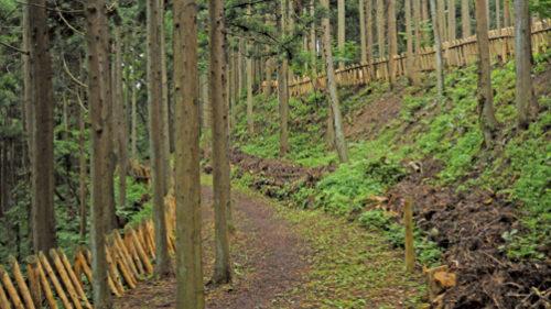 〈八郎潟町〉浦城跡 ▷歴史が残る山城館跡をハイキング
