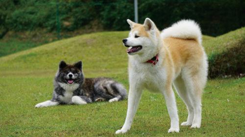 秋田犬の里▷秋田犬に出会える新たな観光拠点