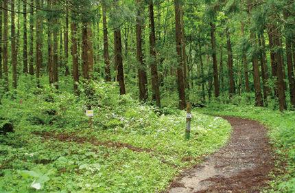 〈上小阿仁村〉太平山 ▷新緑を眺めながら山登りを楽しめる