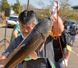 〈八郎潟町〉第30回 全日本野鯉・鮒釣り大会(計量)▷過去最高記録を狙う釣り人が集う
