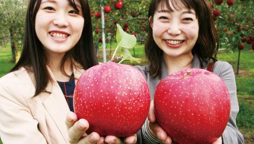 〈横手市〉真人公園りんごまつり▷増田特産・りんご尽くしのまつり