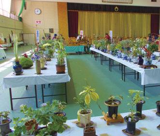 〈上小阿仁村〉山野草展示会▷山野草と花器の組み合わせにも注目