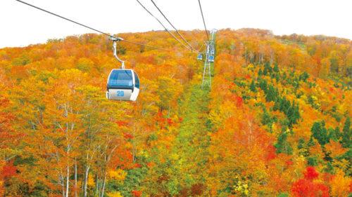 山が赤く染まる季節。紅葉スポットに出かけませんか?〈前半〉