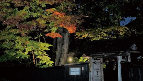 〈仙北市〉角館武家屋敷通り紅葉ライトアップ▷武家屋敷通りの紅葉が幻想的に