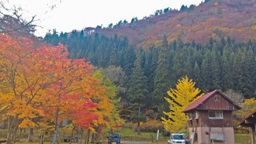 〈上小阿仁村〉萩形キャンプ場周辺▷多様な樹木がそびえる紅葉スポット
