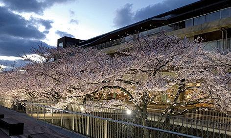 〈能代市〉能代市役所さくら庭ライトアップ▷夜桜のライトアップをやさしく演出