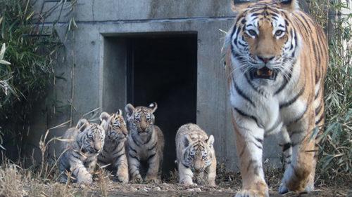 〈秋田市〉大森山動物園〜あきぎんオモリンの森〜▷動物を間近で見て触れ合える