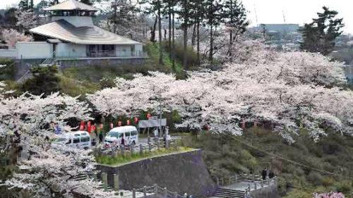 【縮小開催】〈由利本荘市〉本荘さくらまつり▷夜間ライトアップを予定