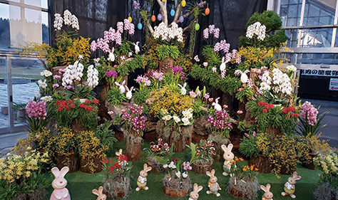 〈潟上市〉ブルーメッセあきた世界の蘭フェア2020▷多種の蘭を組み合わせた展示は見物