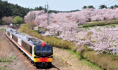 〈八峰町〉御所の台ふれあいパーク▷丘陵地に約800本の桜が咲く