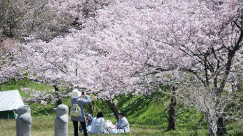 【中止】〈井川町〉日本国花苑さくらまつり▷シャッターチャンス多数 桜と彫刻作品を同時に楽しめる