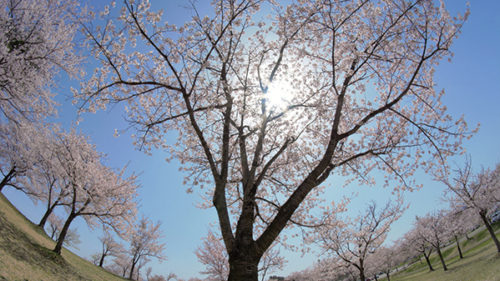 〈羽後町〉五輪坂アルカディア公園▷家族で気軽にアウトドアライフを