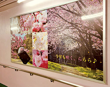 〈井川町〉井川さくら駅地下道リニューアル▷日本国花苑の写真パネルを設置