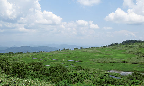 〈大館市〉田代岳▷高山植物が咲き揃い登山客に人気