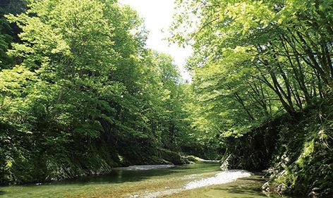 〈上小阿仁村〉萩形渓流▷清流を眺めて心癒やされるひとときを