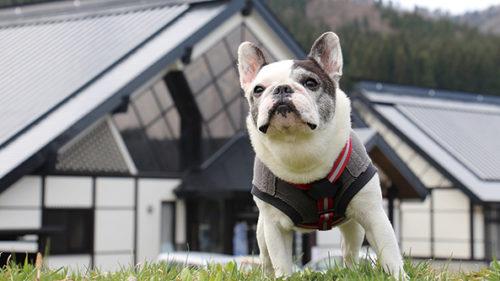 〈美郷町〉六郷温泉あったか山 ペット同伴宿泊可コテージ▷愛犬も喜ぶプライベートドッグラン