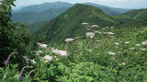〈美郷町〉真昼岳▷高山植物を眺めながらトレッキング