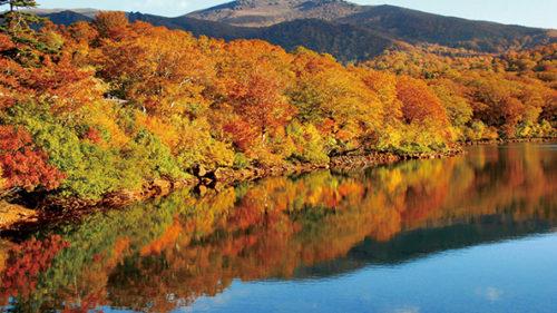 〈東成瀬村〉須川高原 須川湖▷湖面に映る紅葉が見頃を迎える