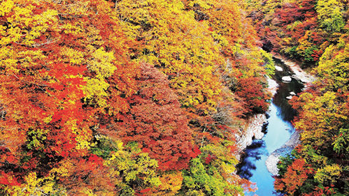 〈湯沢市〉小安峡大噴湯▷蒸気が激しく噴出する大噴湯 秋は渓谷が紅葉に染まる