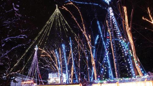 〈横手市〉槻の木光のファンタジー▷高さ約40mを誇る生木のツリー