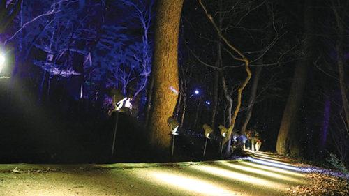 〈小坂町〉カミのすむ山 十和田湖 光の冬物語▷全長約1kmを神秘的な光で演出