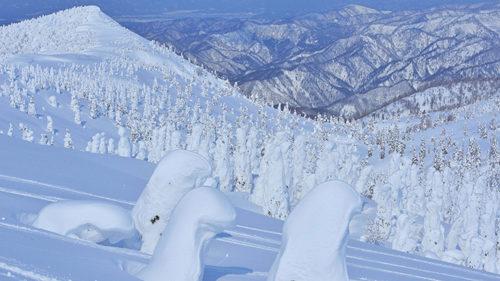 〈北秋田市〉ゴンドラで行く、日本三大樹氷 森吉山▷一面に広がる樹氷群を観賞できる