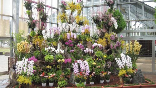 〈潟上市〉ブルーメッセあきた世界の蘭フェア2021▷多種多様な蘭を組み合わせた豪華展示が見る人を魅了する