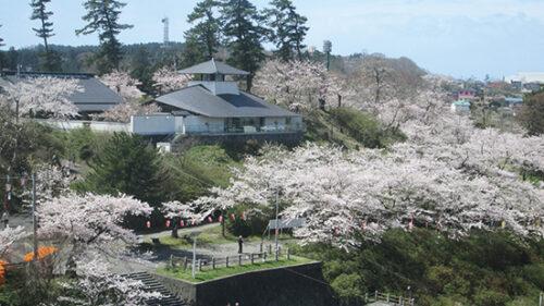 〈由利本荘市〉本荘さくらまつり▷昼と夜それぞれの顔を見せる桜