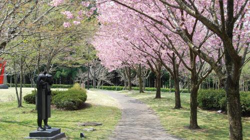 〈井川町〉日本国花苑▷幅広い層に愛される桜の美しい公園がシーズンイン