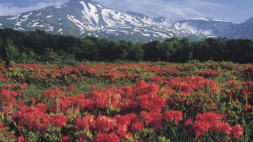 〈由利本荘市〉桑ノ木台湿原▷鳥海山と大自然の共演を楽しめる