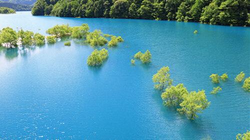 〈仙北市〉玉川の水没林▷湖面から木々が生えたような景色
