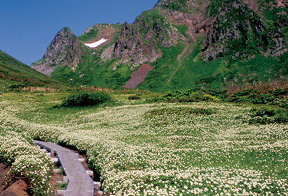 〈仙北市〉秋田駒ヶ岳 交通規制▷混雑解消・自然環境保護にご協力を