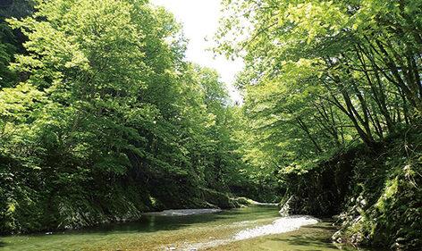 〈上小阿仁村〉萩形渓流▷清流を眺めて心癒やされる時間を