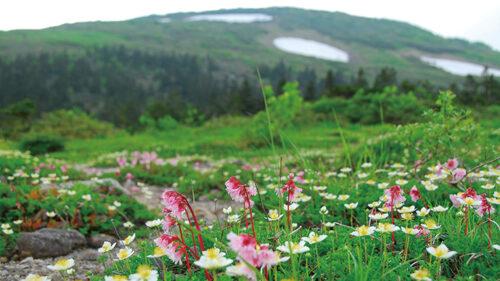 〈北秋田市〉ガイドと行く、森吉山自然観察会▷森吉山を熟知したガイドとハイキング
