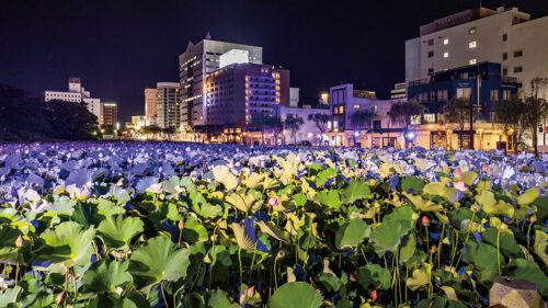 〈秋田市〉千秋公園蓮の花ライトアップ▷秋田市民が憩う「千秋公園」のお堀で蓮の花を観賞しよう