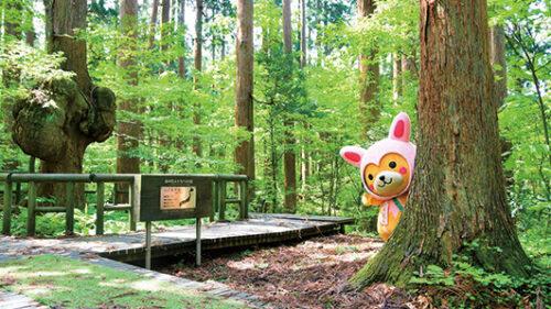 〈上小阿仁村〉かみこあに村PRキャラクター「こあぴょん」▷「こあぴょん」の正体はクマだった!