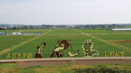 〈八郎潟町〉田んぼアート▷「釣りキチ三平」の田んぼアートが見頃を迎える